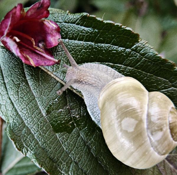 Snail by Monnika