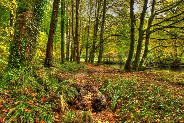 Autumn in Glenarm forest by ANIMAGEOFIRELAND