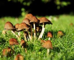 fungi bokeh