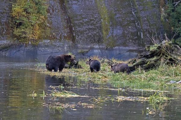 Three bears by Hazelmouse