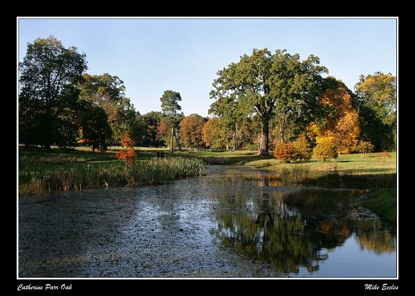 Catherine Parr Oak by oldgreyheron