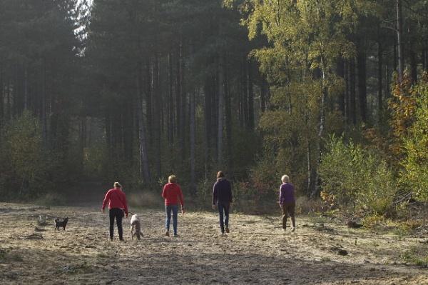 autumn walk by lionking