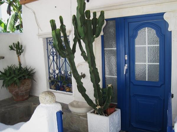 Cactus by Averil