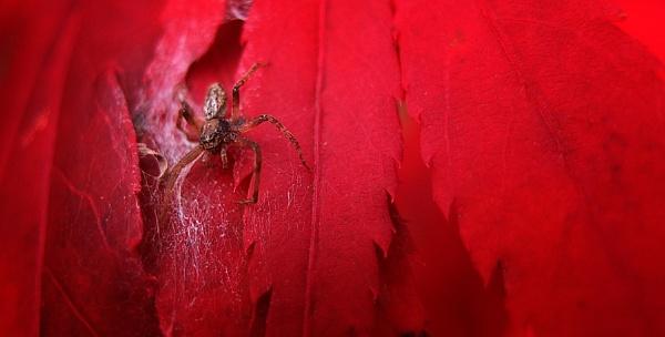 arachnophobia by timbo
