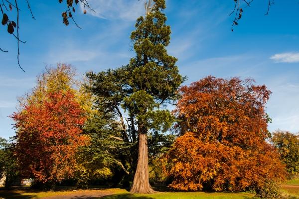 Autumn Shades by lynks