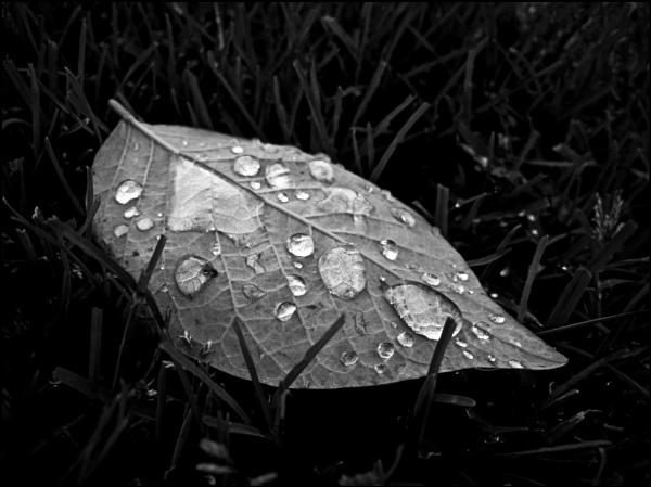 Late October Rain