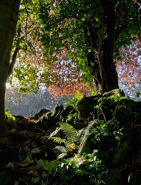 Into The Light by Jasper87
