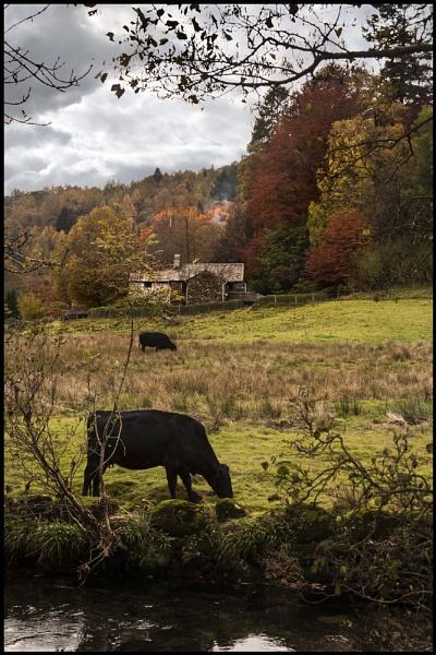 Rural Langdale. by Niknut