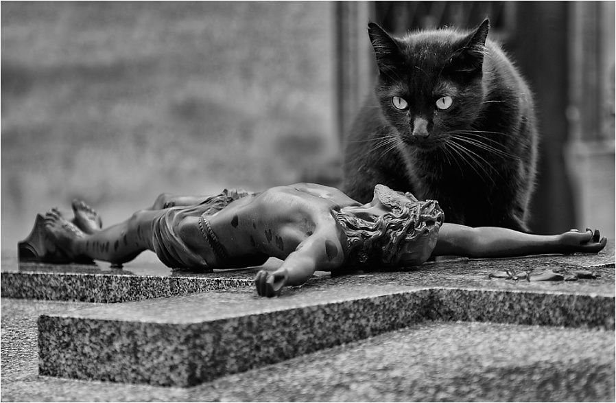 The Cat & the Crucifix