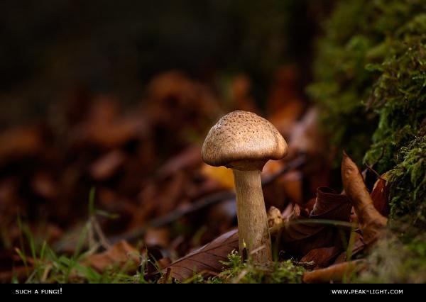 Such a Fungi! by martinl