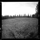 Deer Park No 897