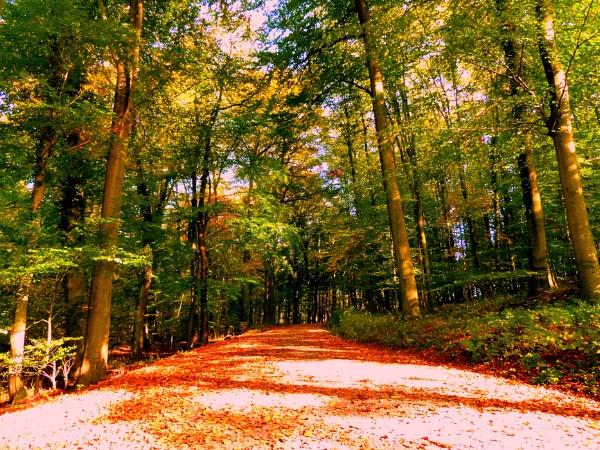 Sunny Autumn by 77