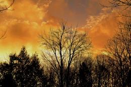 Colors After Sandy, Buxton Maine