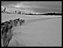Tromso Dogs