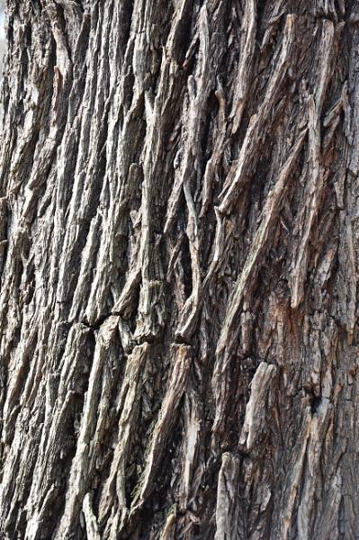tree bark by malaysiaguy