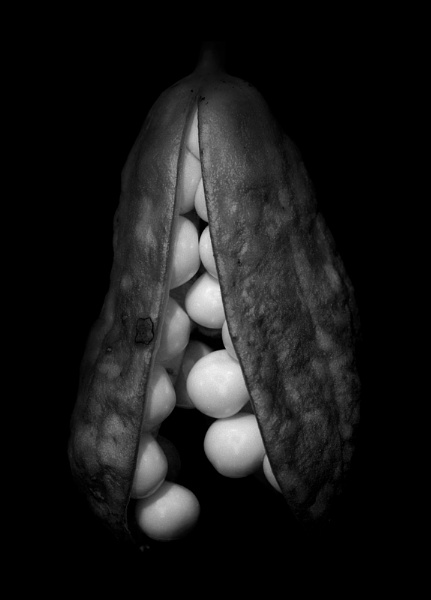 Seed pod by aliquidvision
