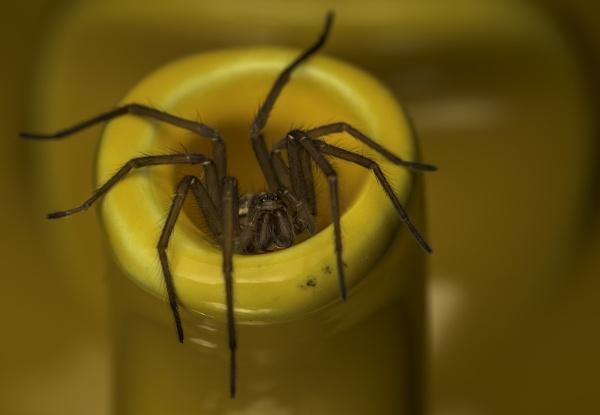 Eensy Weensy Spider by philgood