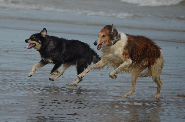 Boris and Gnasher at the beach by Holmewood