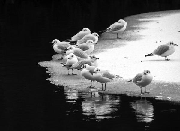 Gulls by victorburnside
