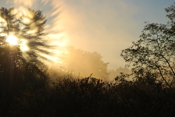 Foggy Start by Mychael
