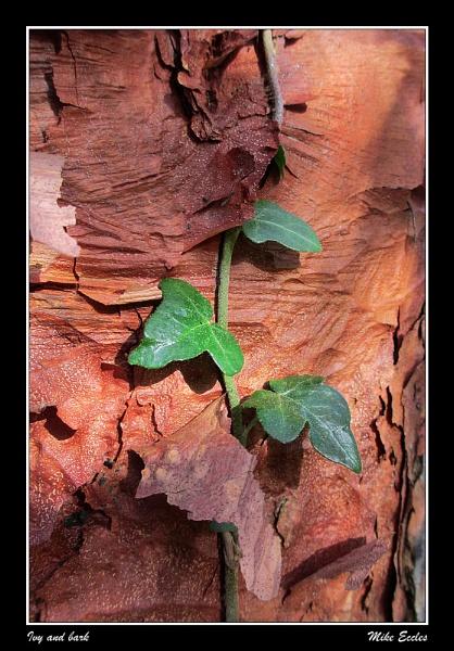 Ivy and bark by oldgreyheron