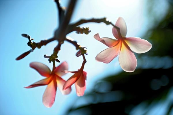 flowers by mute