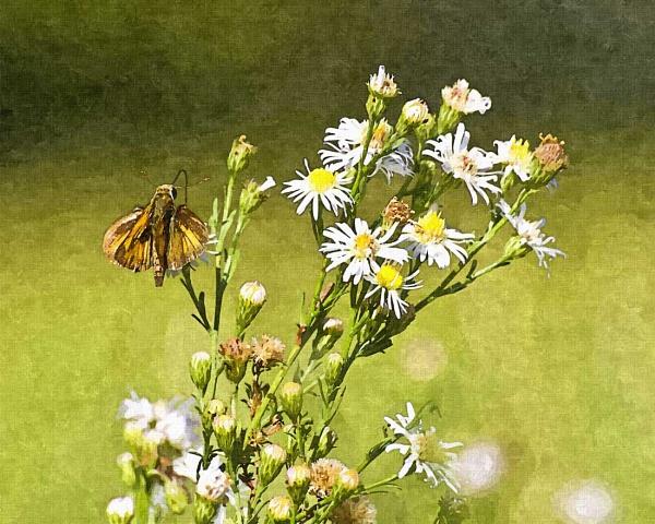 Last flowers of summer by wsteffey
