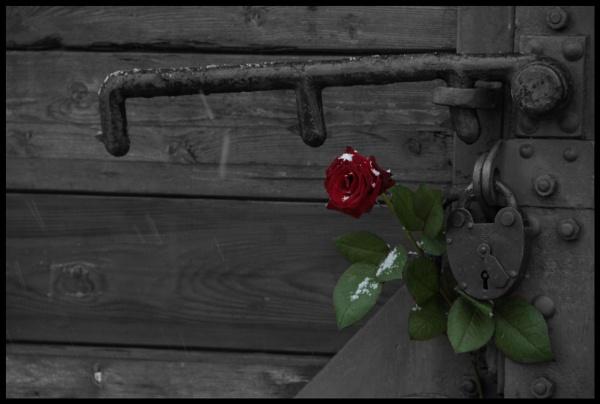 Auschwitz Birkenau by AbjectMisery