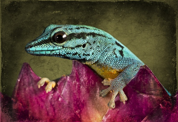 Gecko by Angi_Wallace