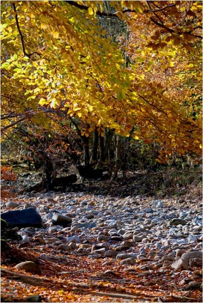 Rustic Riverbed