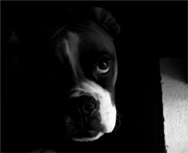 Maggie by Daisymaye