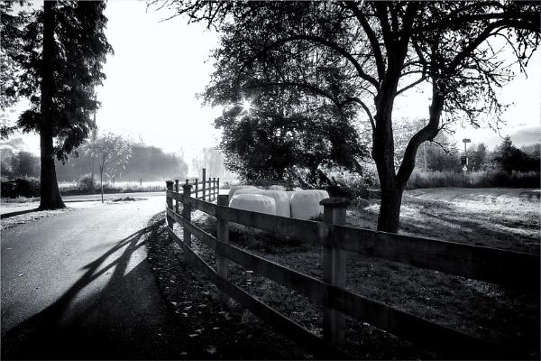 Down the Driveway by Daisymaye