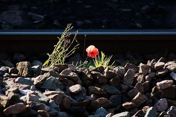 Along the railway line by xwang