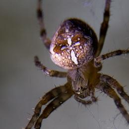 Spider - closer