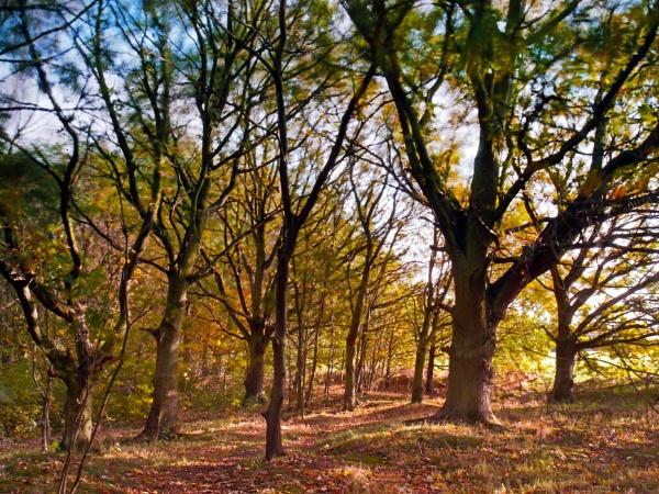 Autumn Colours by SteveMcHale