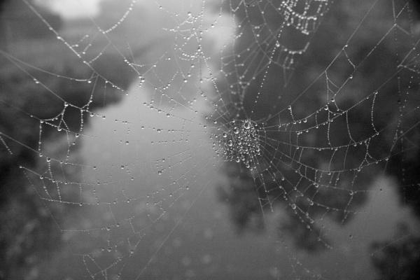 Winters Web by MGathercole