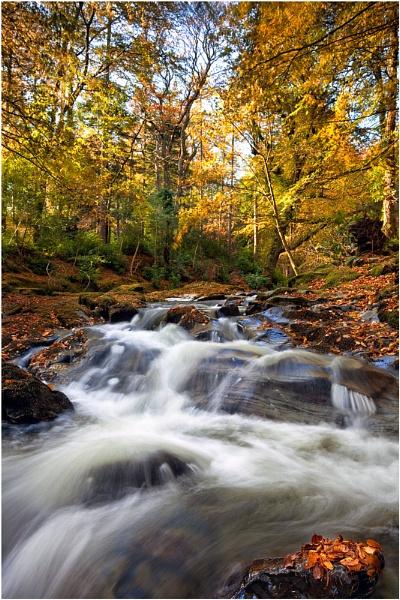 Autumn Flow by Porthos
