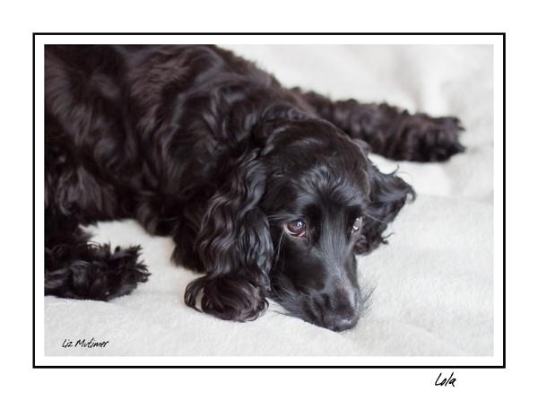 Lola by LizMutimer