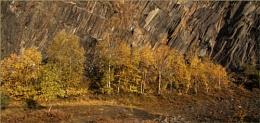 Autumn in the Quarry
