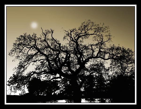 Margam Tree 3 by Bonvilston