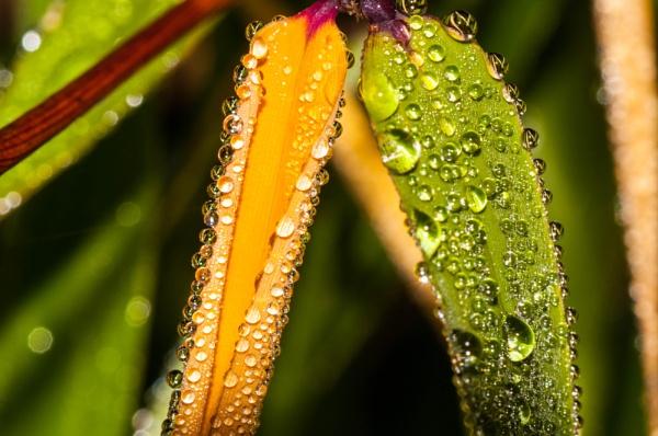 Autumn dew by DavyB