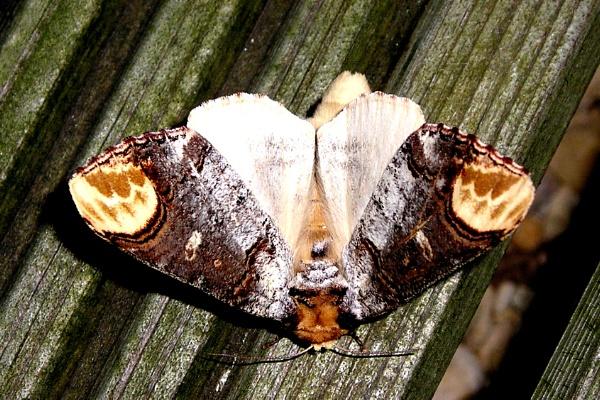 moth! by pics20000
