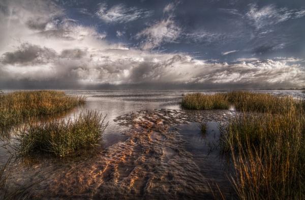 Marsh Footprints by carper123