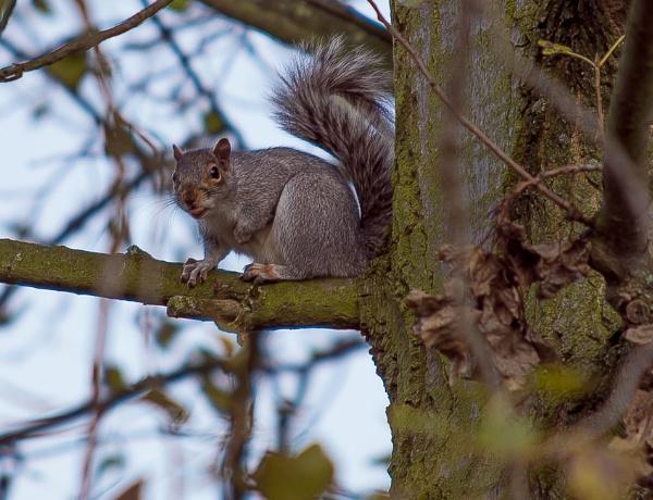 Nuts all Hazel Nuts.... by stupot