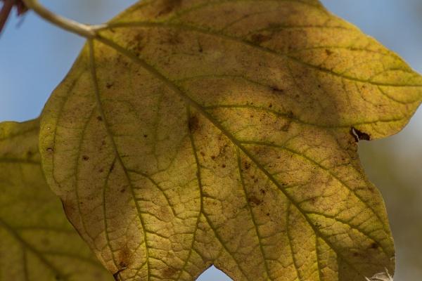 Autumn. by stupot