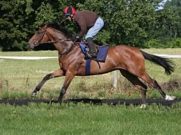 Andrew Balding's Gallops