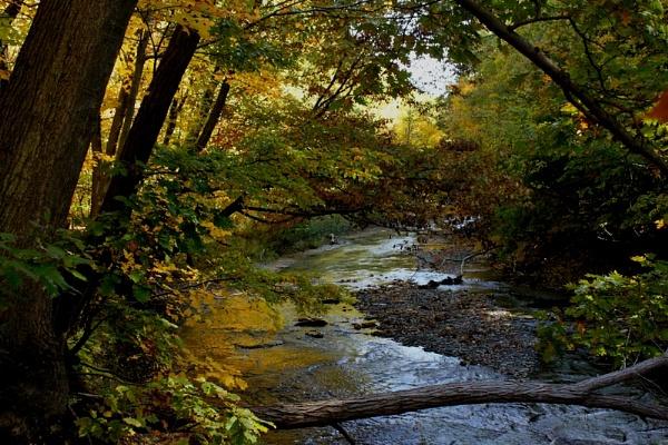 fall is near by blkwolf007