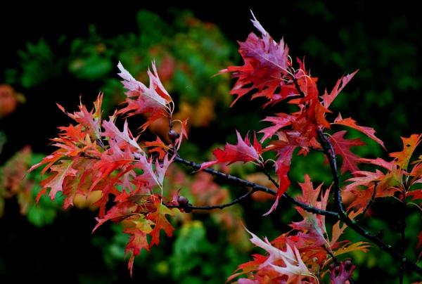 More Autumn Colours by cisco4611