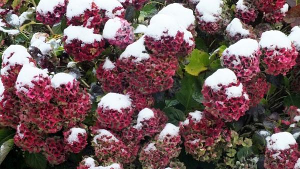 october snow by kevlense