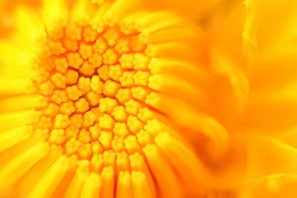 sun sun sun by thedude1994